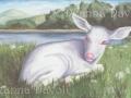 Albino Fawn Deer Art